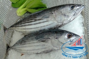 Skipjack Tuna Fish